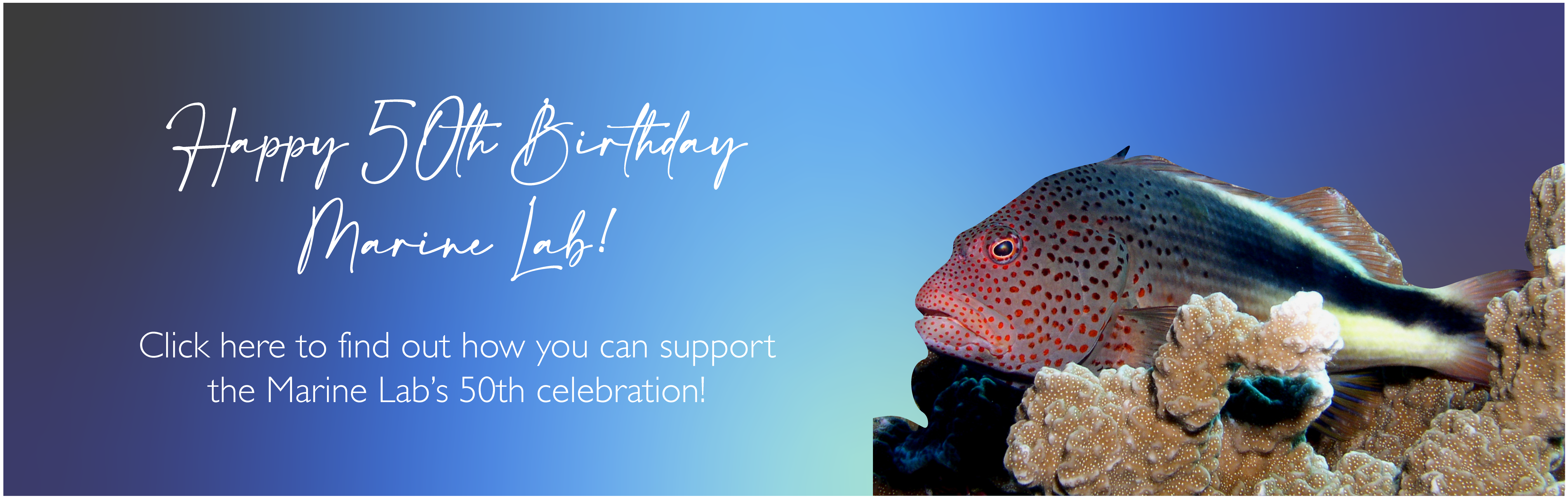 Happy 50th Birthday Marine Lab! Click here to find out how you can support the Marine Lab's 50th celebration!
